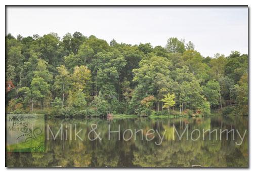 beautiful lake forest